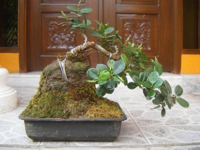 my experimental bonsai