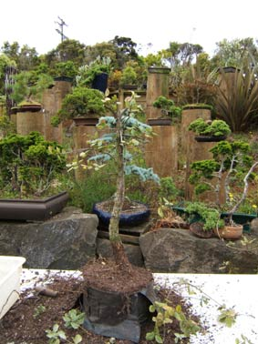 bonsai group planting